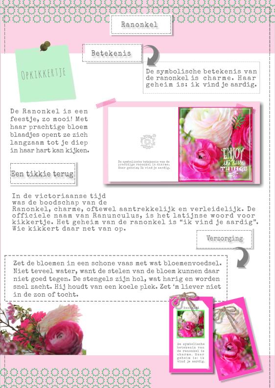 roze roos betekenis
